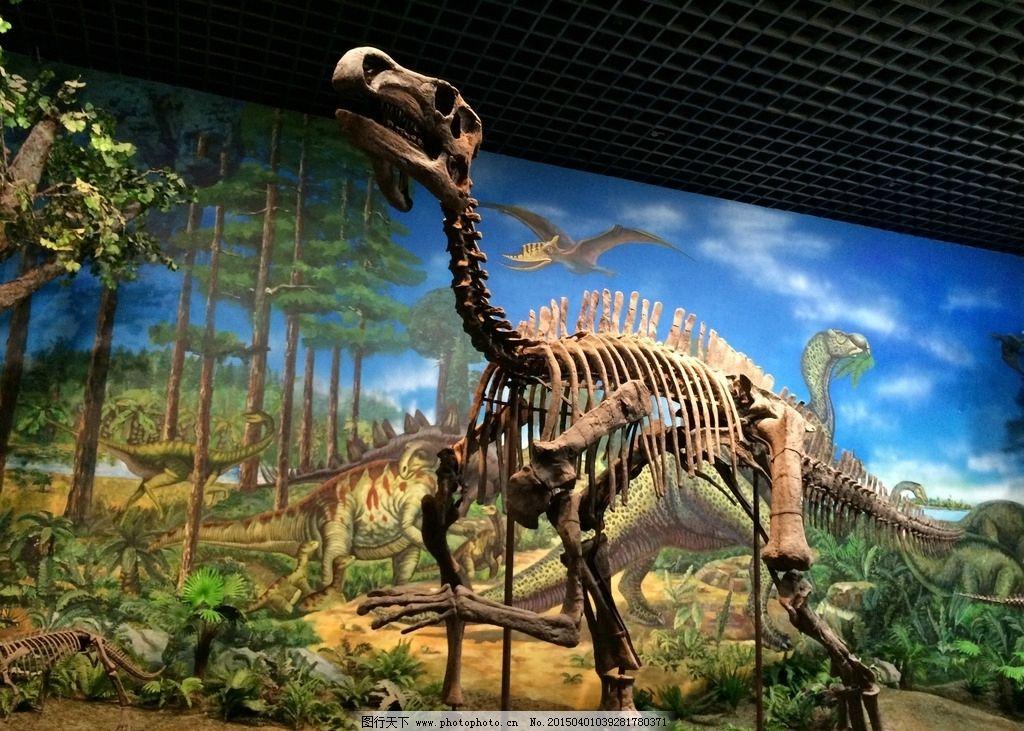 恐龙化石 内蒙古 博物馆 爬行动物 摄影