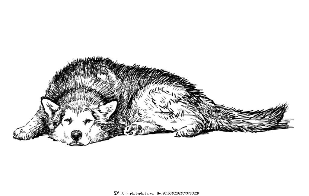 手绘哈士奇犬矢量素材 动物 狗 宠物 插画 海报 背景 矢量动物