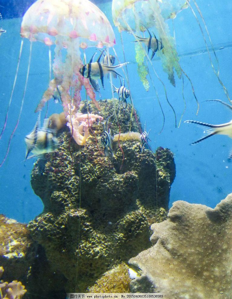 海洋生物 水族馆 海洋馆 鱼 生物 海底 水草 鱼群 海底世界 珊瑚 珊瑚