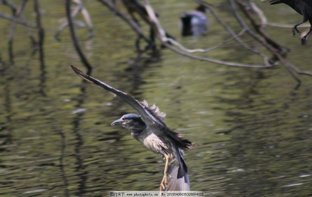 鸟类适应飞行的特征