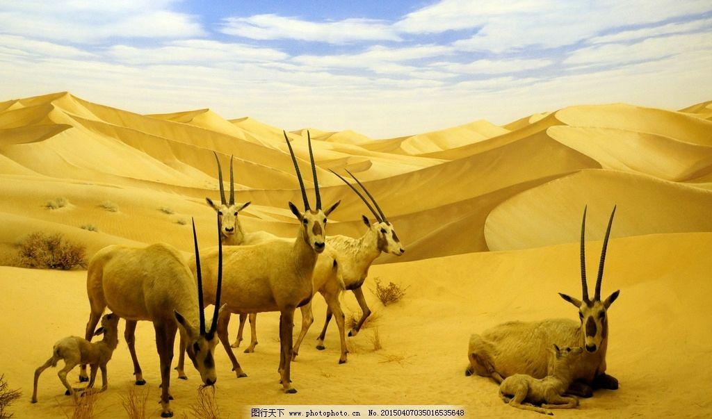 沙漠羚羊 动物 黄沙 摄影 生物世界 野生动物