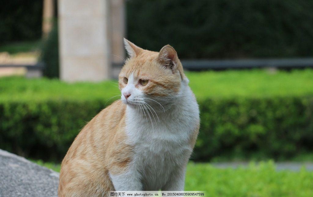 方动物小猫油画