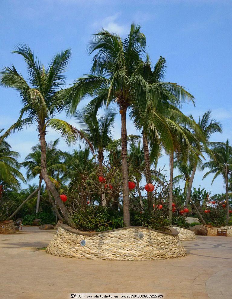 景观设计 园林景观 景观园林 椰树 海南风景 园林建筑集锦 摄影 建筑