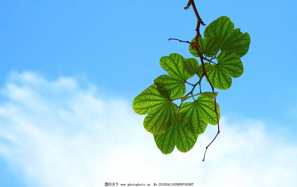 绿色 清新 树叶 绿叶 叶子 清新植物 嫩枝 树枝 蓝天 天空 白云 唯美