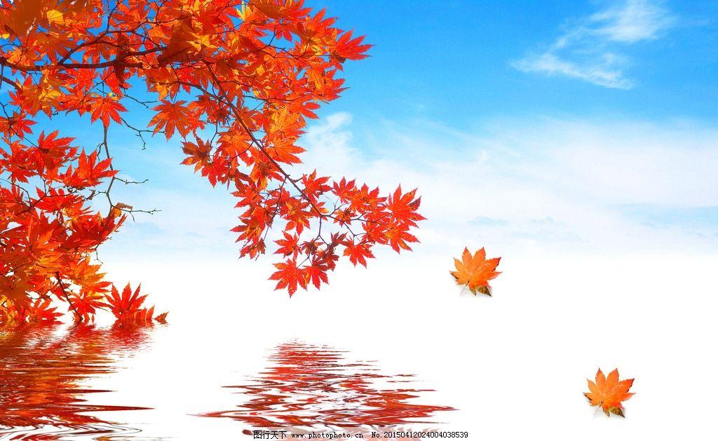 秋天大自然风景图片枫叶
