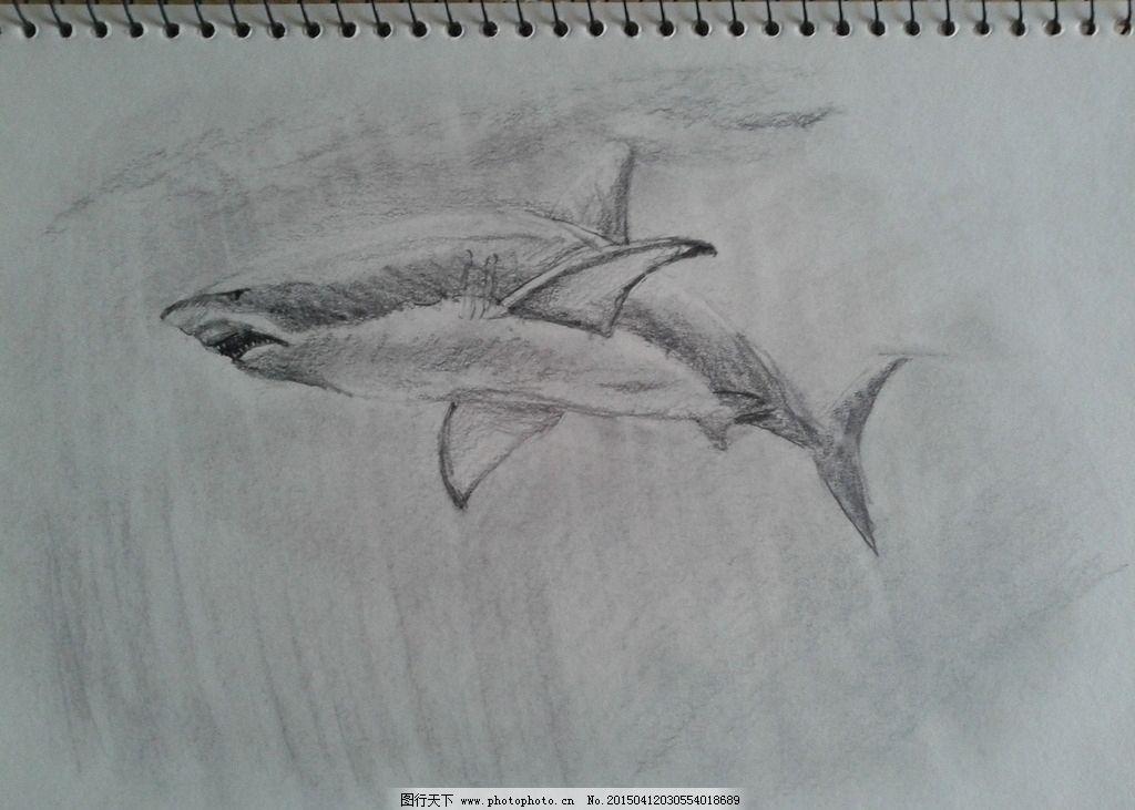 速写 黑白 鲨鱼 铅笔 简单