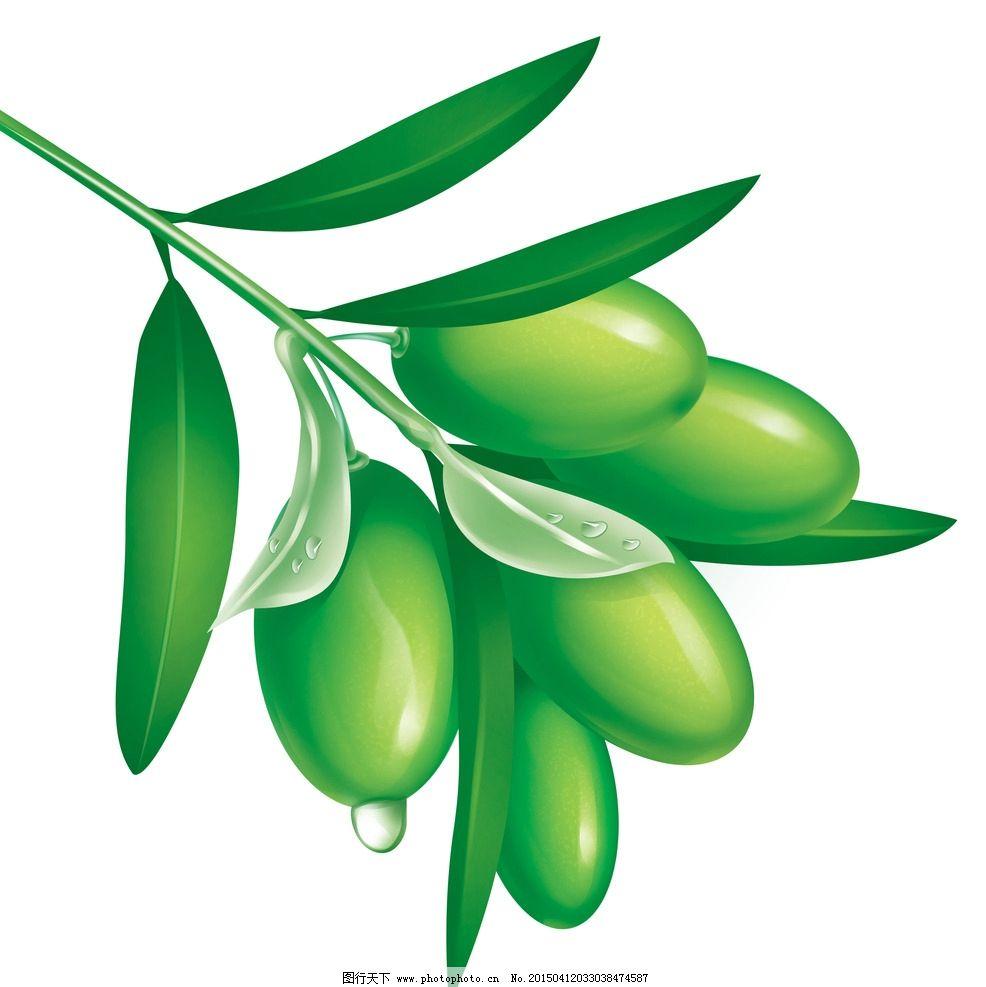 橄榄 手绘橄榄 绿色 橄榄枝 橄榄叶 绿色植物 设计 psd分层素材 psd