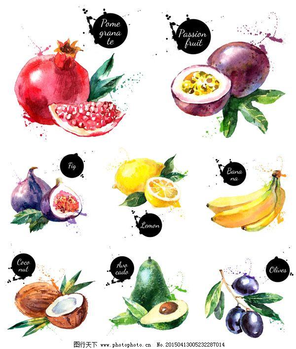 石榴 矢量素材 手绘 无花果 矢量素材 果实 新鲜 水彩水果 墨迹 手绘