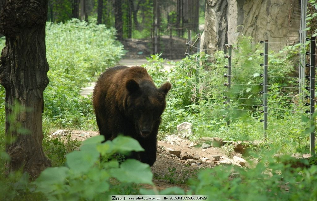 大城山动物园的熊图片