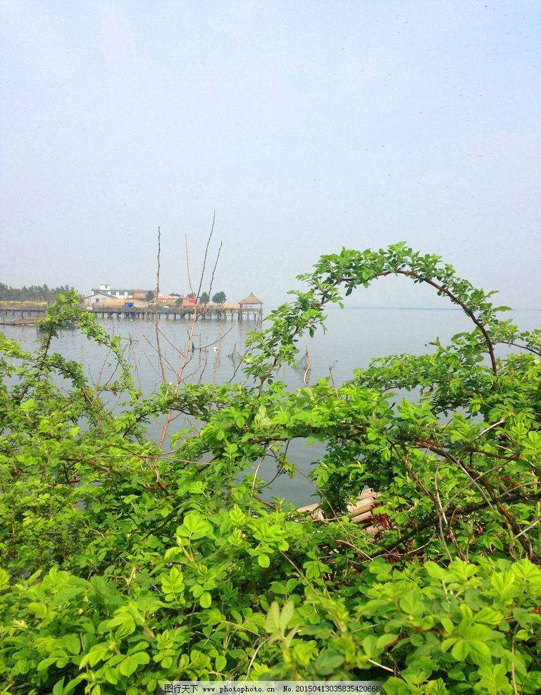 莲花岛图片