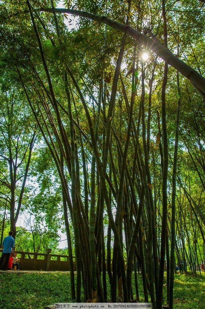 望江公园 四川 成都 旅游 园林 竹 翠竹 竹林 绿 阳光 摄影 生物世界