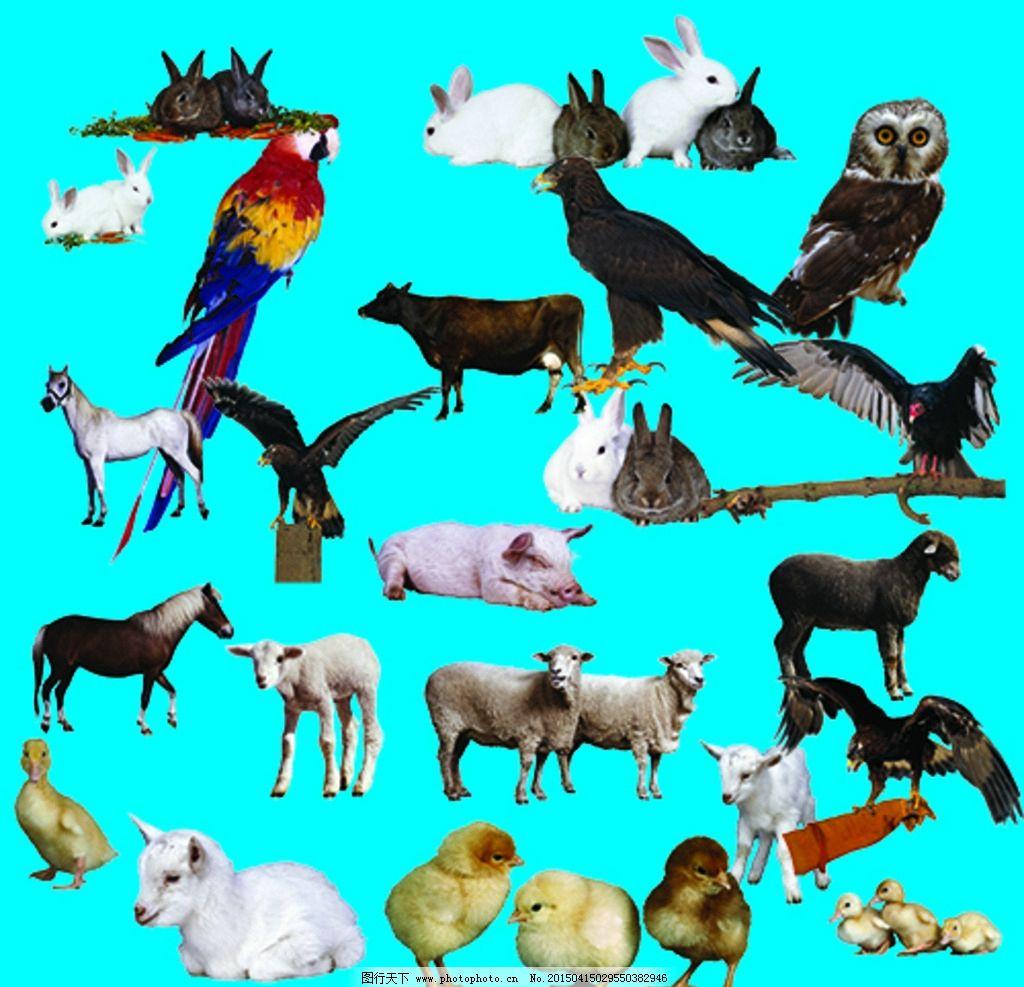 动物大全 设计 psd分层素材 300dpi psd 设计 广告设计 广告设计 100d