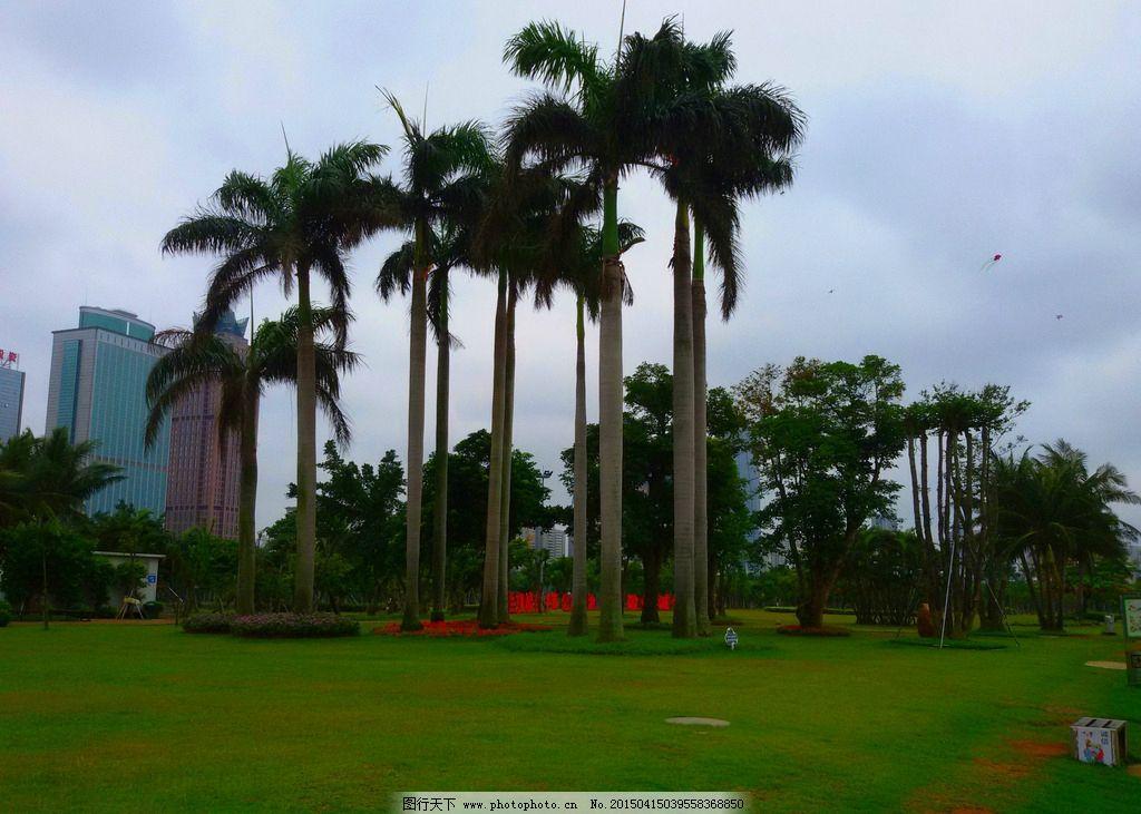 园林景观 景观园林 草坪 椰树 景观设计 园林建筑集锦 摄影 建筑园林
