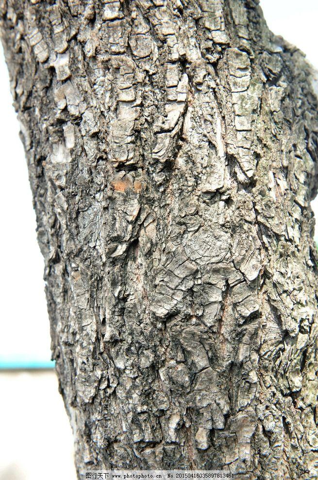 树皮 树干 材质 贴图 素材 纹理 高清纹理 摄影 生物世界 树木树叶