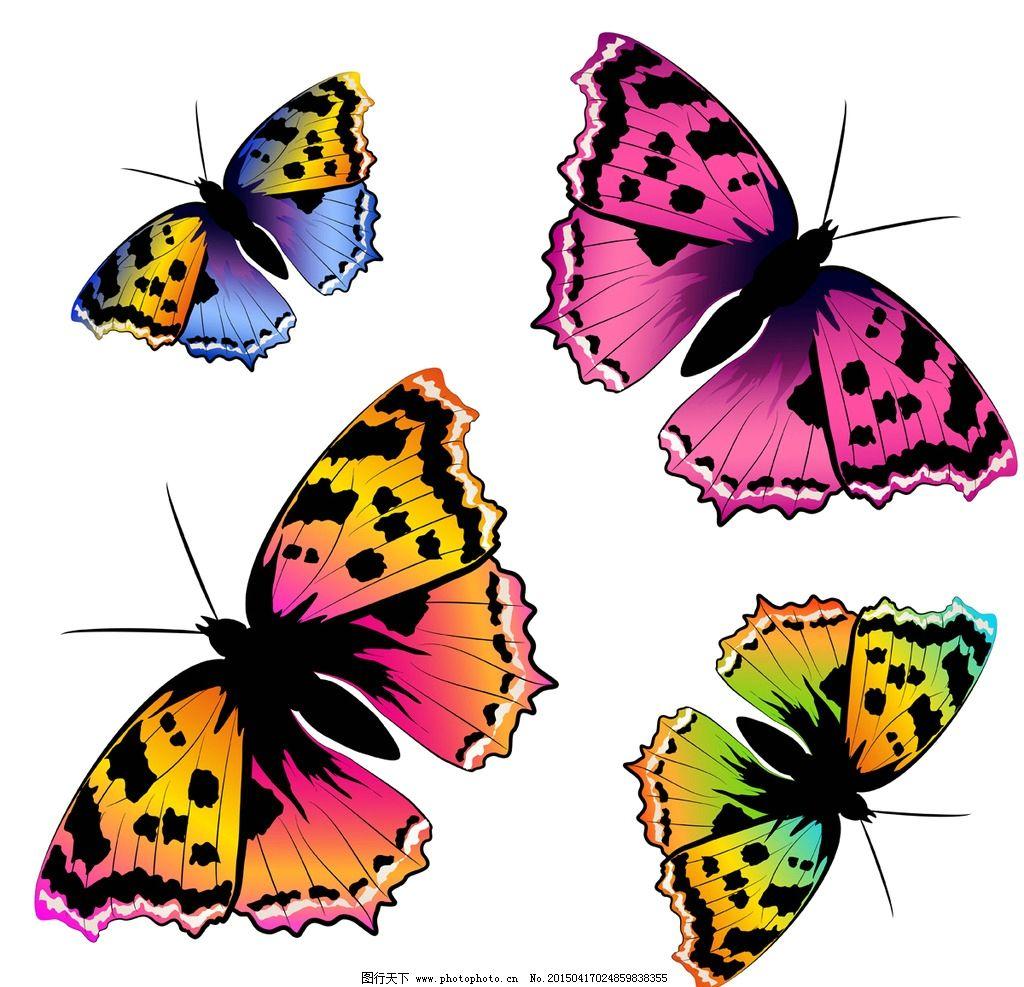 蝴蝶 彩色蝴蝶 手绘 昆虫