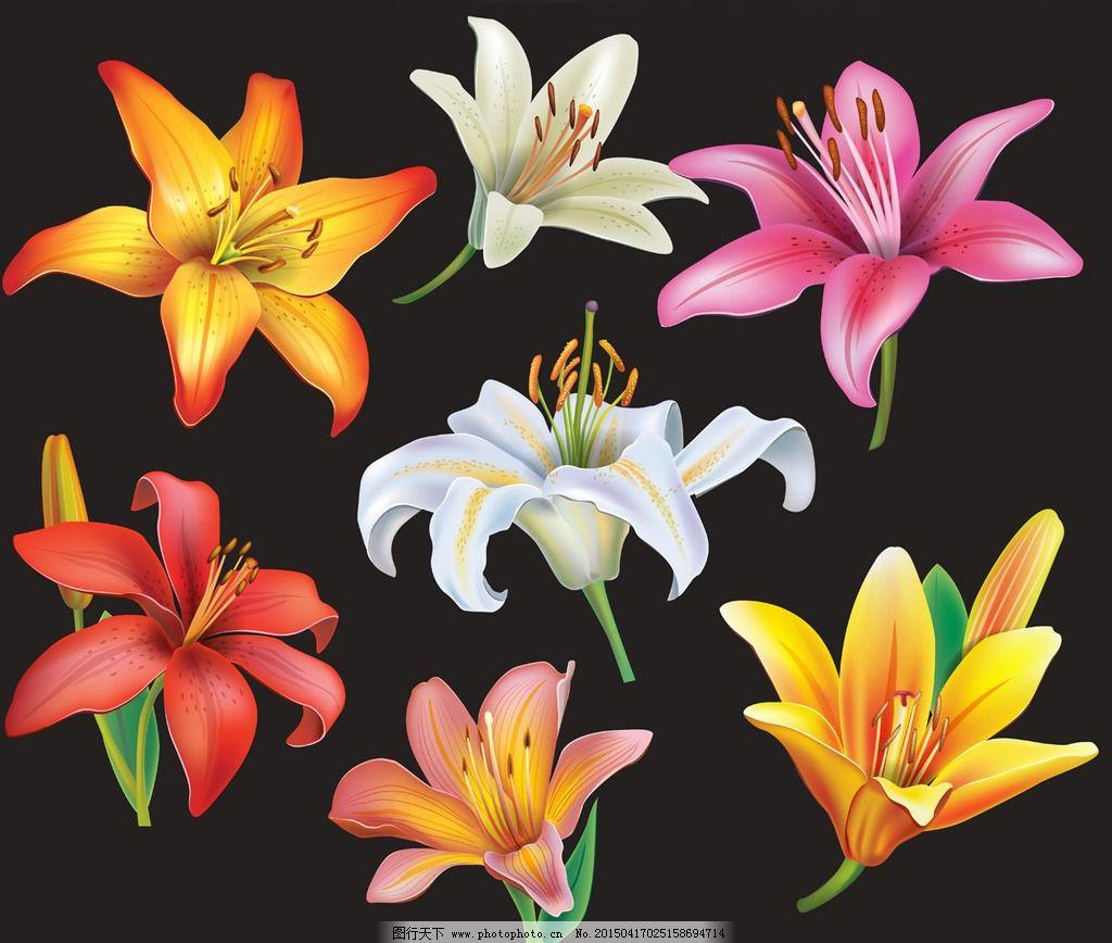 手绘花卉 花朵 鲜花 花卉插图 百合花 矢量