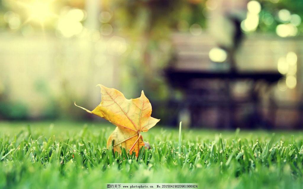 落叶背景免费下载 绿色植物 落叶 清新 唯美 绿色植物 清新 落叶 唯美