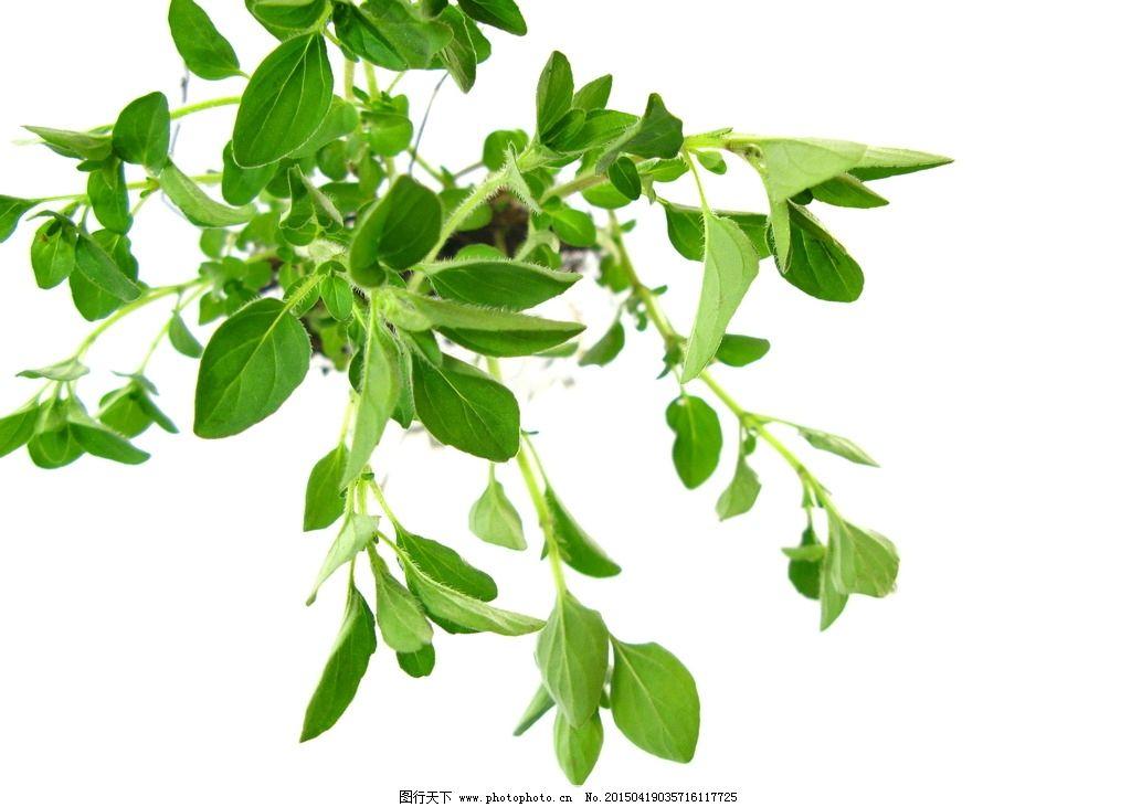 绿色小植物图片