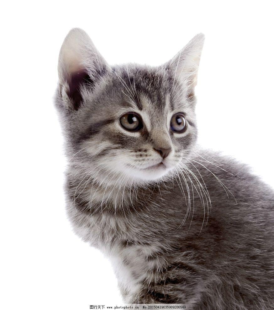 手绘q版猫咪一大堆