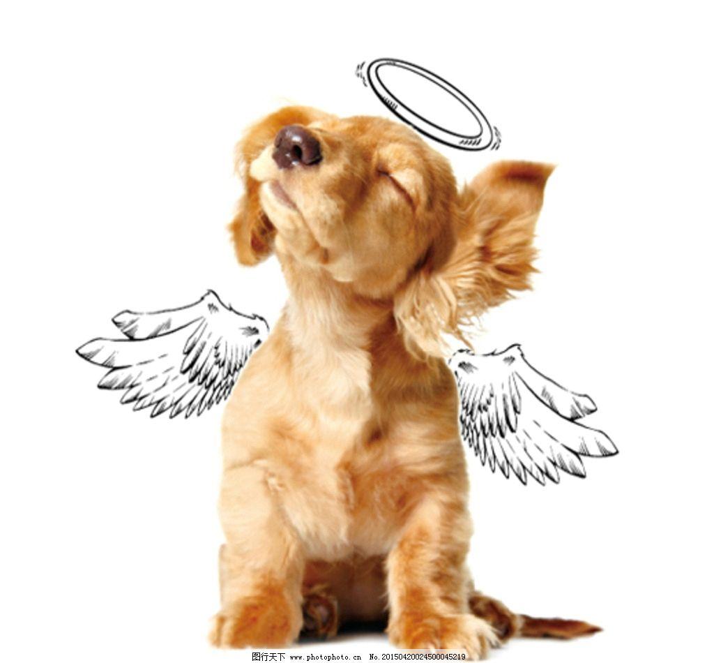 狗 手绘 矢量 原创 设计 创意 天使 翅膀 光环 设计 生物世界 家禽