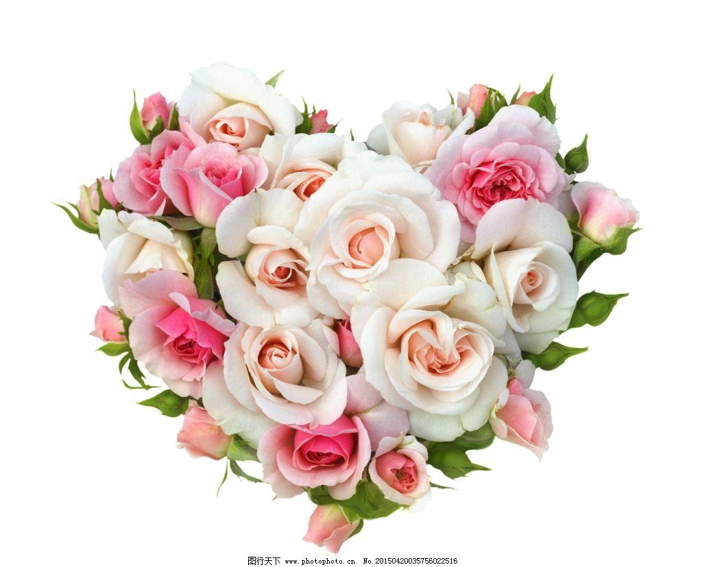 淡雅 心形 玫瑰花 淡雅花朵