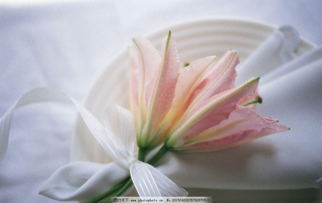 花 水仙花 送花 礼品 鲜花 百合 百合花 一束花 共享分素材 摄影 生物