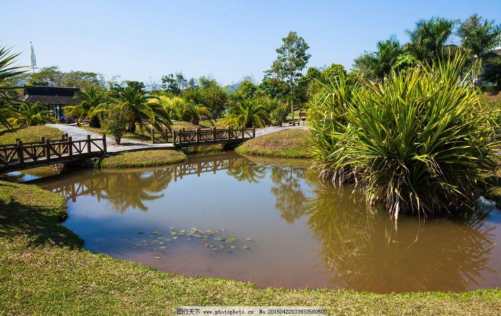 西双版纳 热带植物园 版纳植物园 中国科学院 勐仑 热带植物 云南