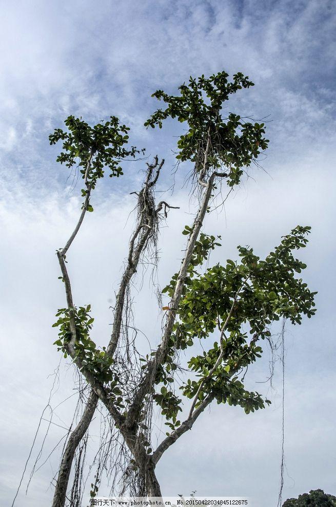 马来西亚 热带植物 海岛 风光 大海 摄影 自然景观 自然风景 240dpi
