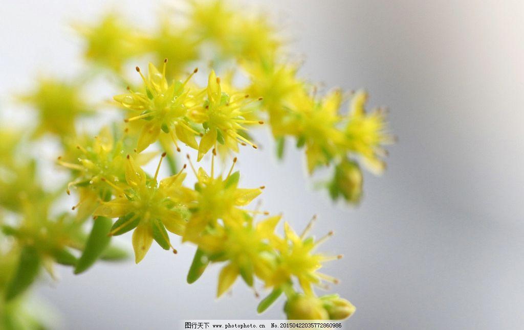 黄色的花 水珠植物 静物 小清新 花卉 摄影 高清 壁纸