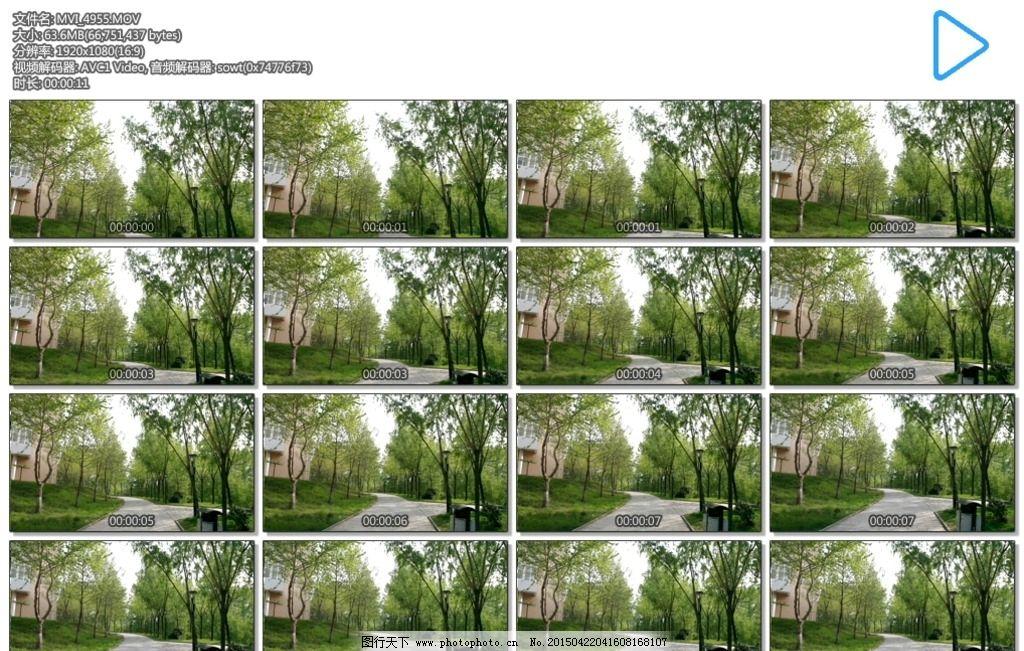 林荫小路 树木 树荫 道路 阳光 春天 多媒体