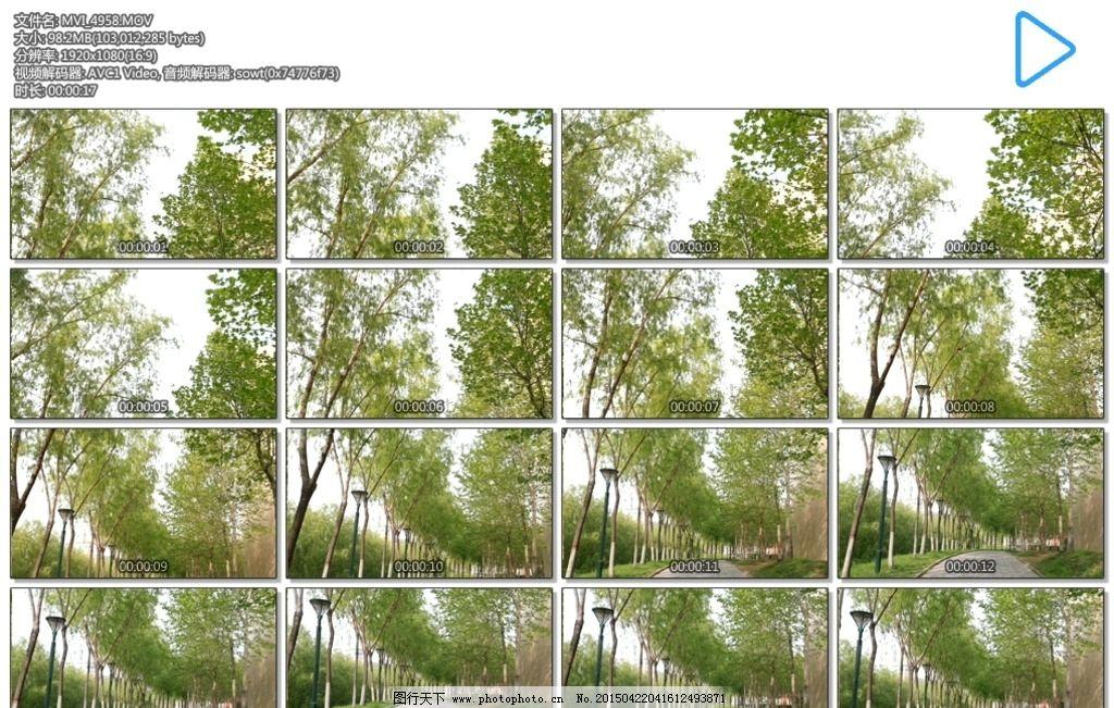 林荫小路 树木 绿叶 道路 绿色 春天 多媒体