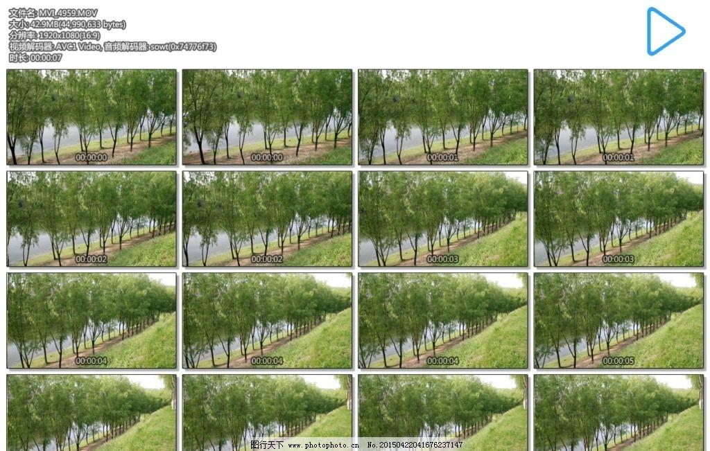湖边树林 草地 山坡 树木 湖水 多媒体