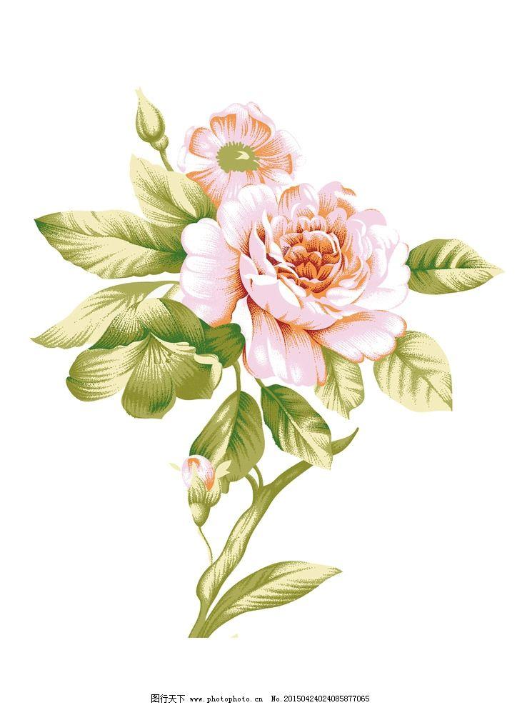 手心的蔷薇和声简谱