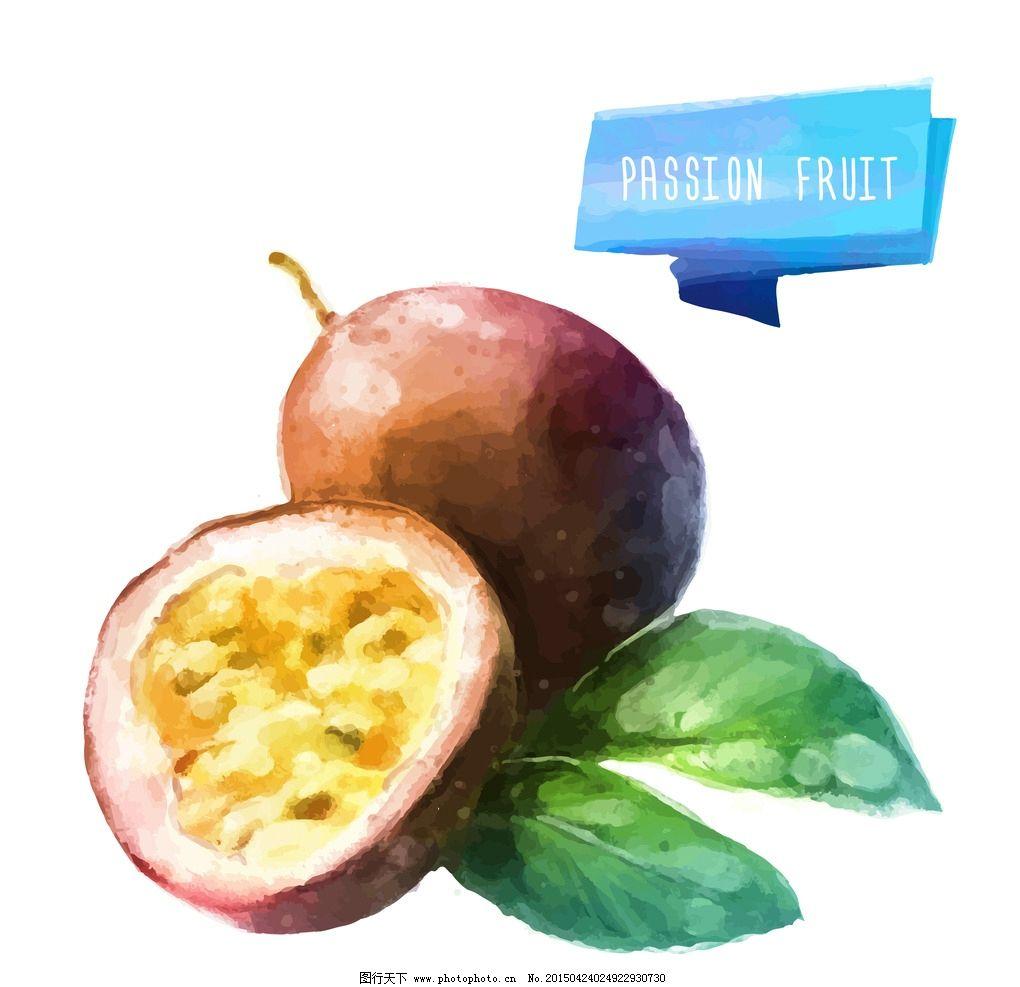 百香果 手绘水果 水彩水果 矢量