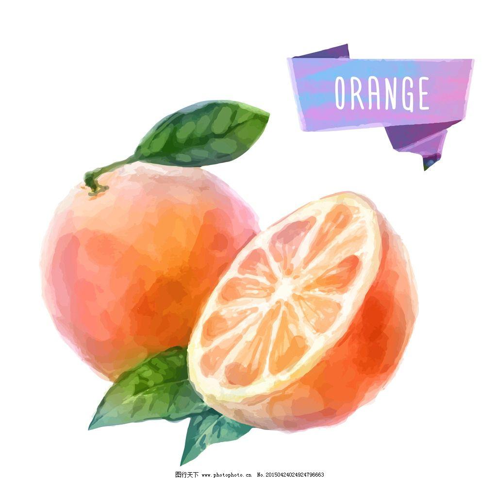 手绘水果 橙子 水彩水果 设计 矢量 eps 设计 生物世界 水果 eps