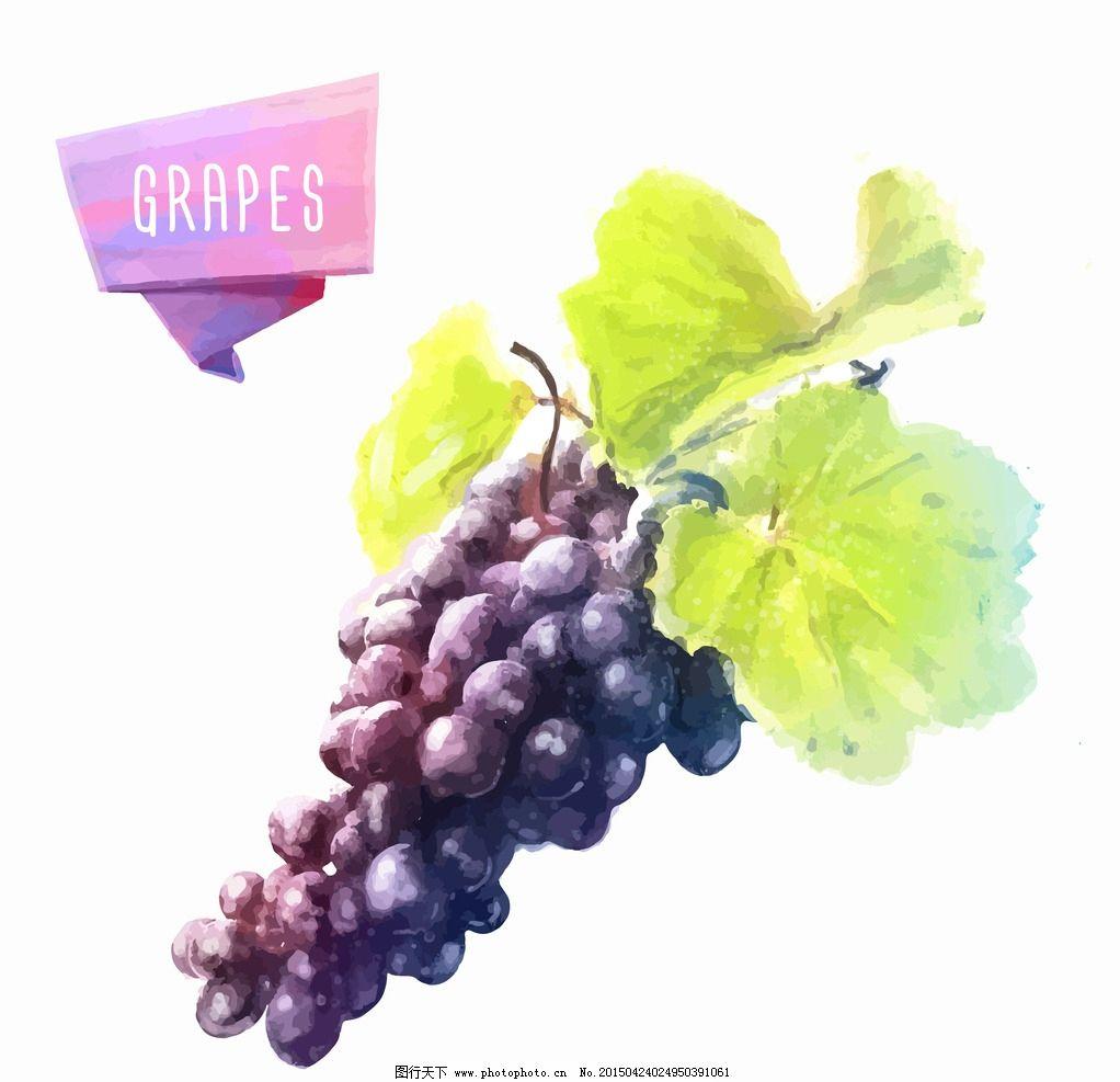 紫葡萄 手绘水果 水彩水果 矢量