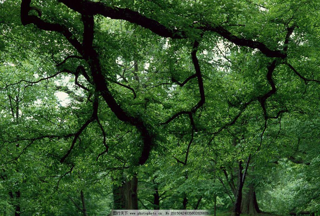 特写 树特写 森林 大自然 春天 绿树 树叶 阳光 摄影 生物世界 树木