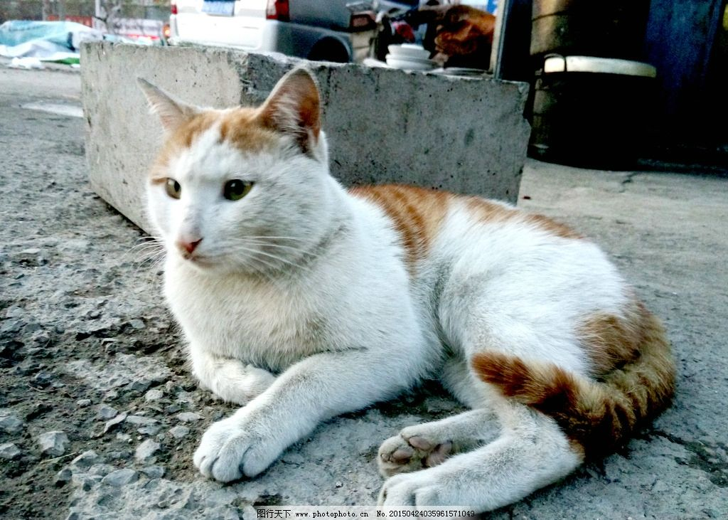 猫 猫咪 小猫 花猫 动物 宠物 摄影 生物世界 家禽家畜 72dpi jpg
