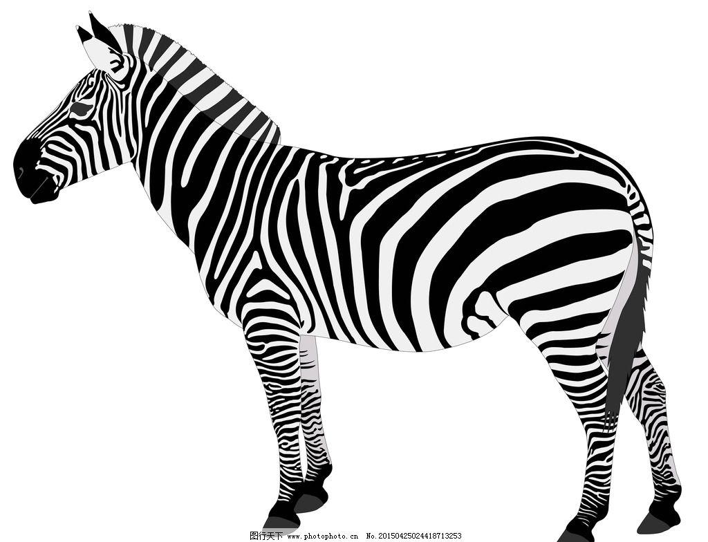 手绘 黑白条纹 野生动物