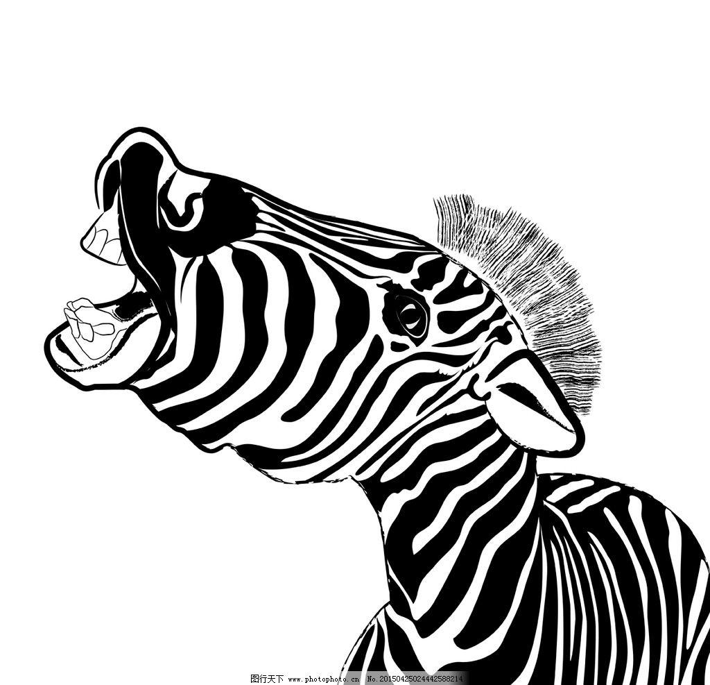 黑白条纹 野生动物