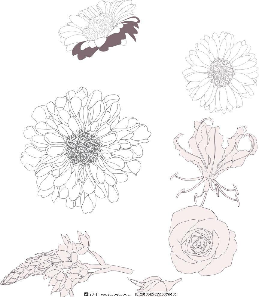 花朵素描画 玫瑰花