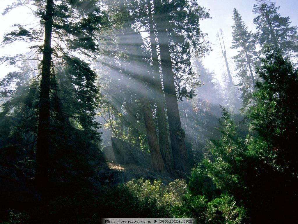 清晨阳光森林意境图_背景图片_底纹边框_图行天下图库