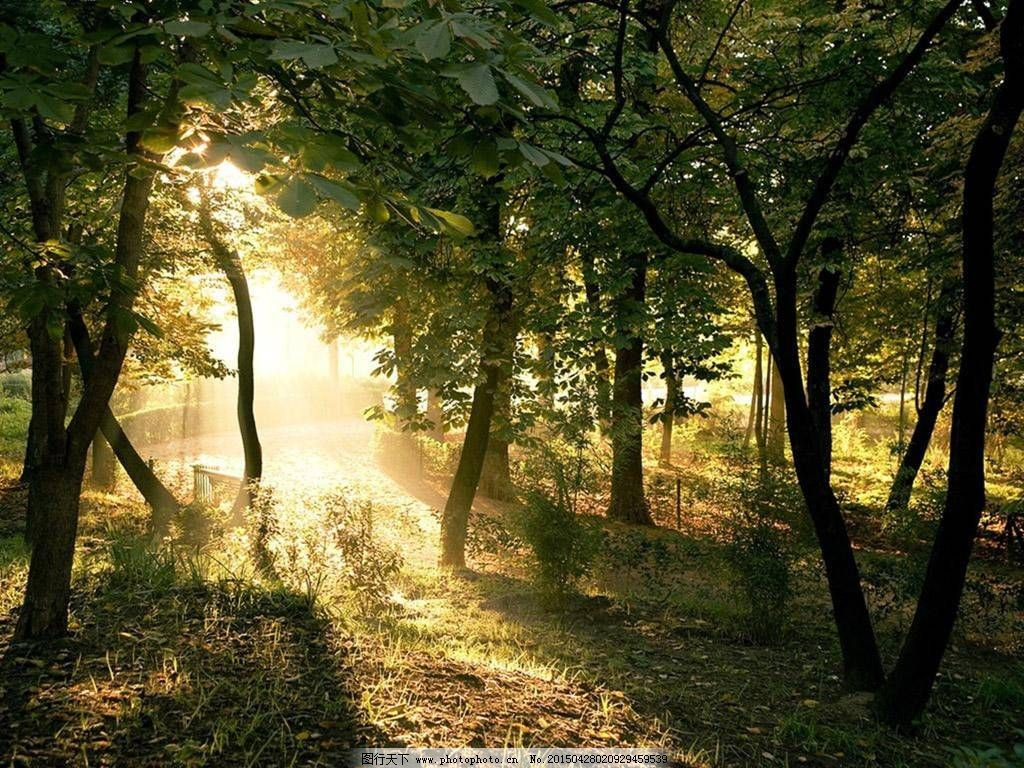 午后阳光森林风景意境图片素材下载
