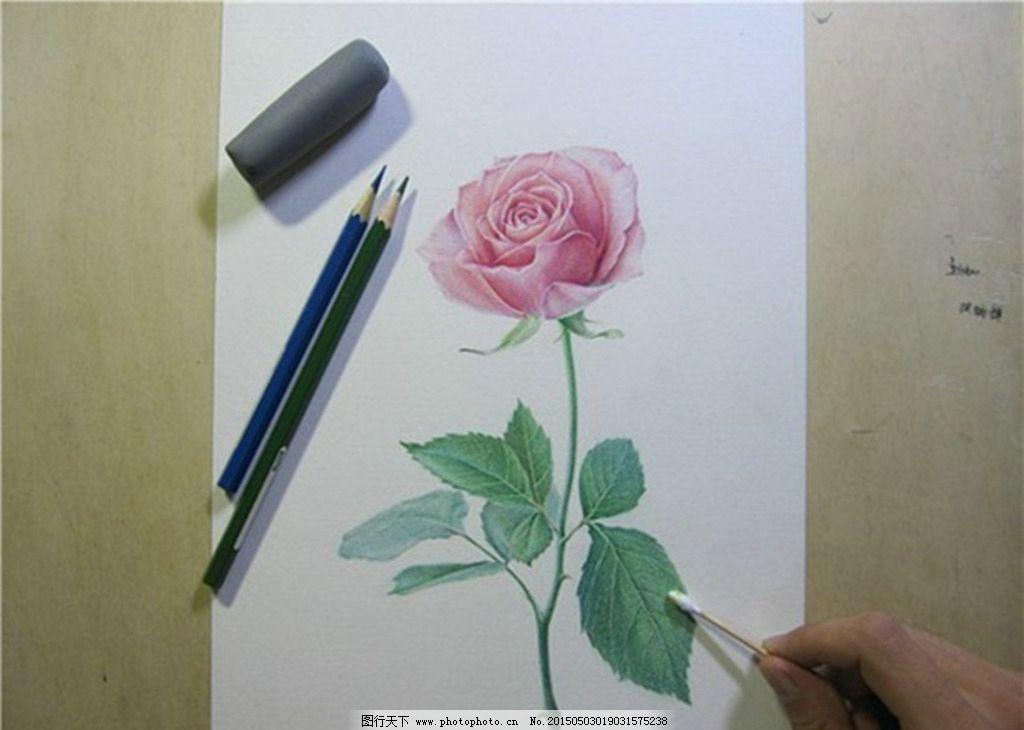 彩色铅笔画 玫瑰图片