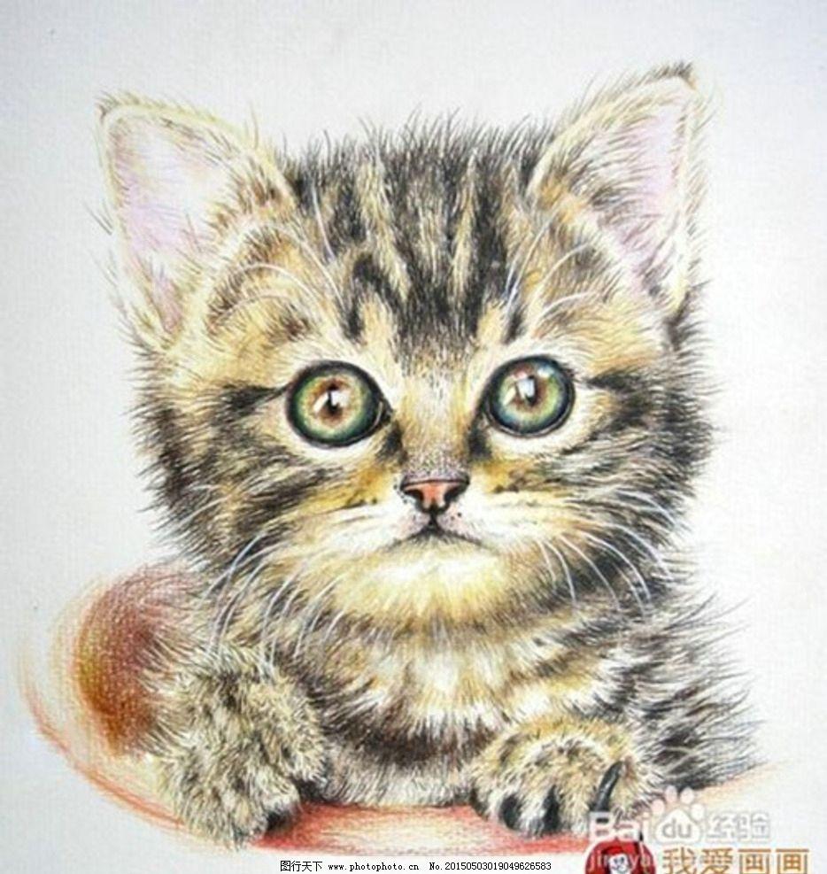 彩色铅笔画 猫咪图片
