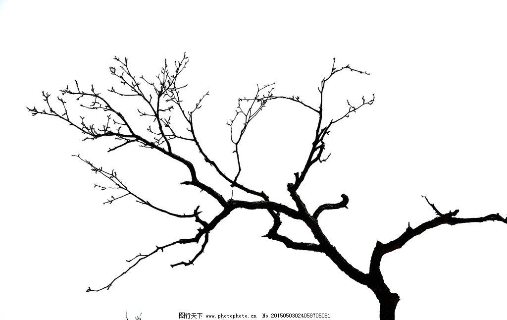 树枝 黑白 对比 高清