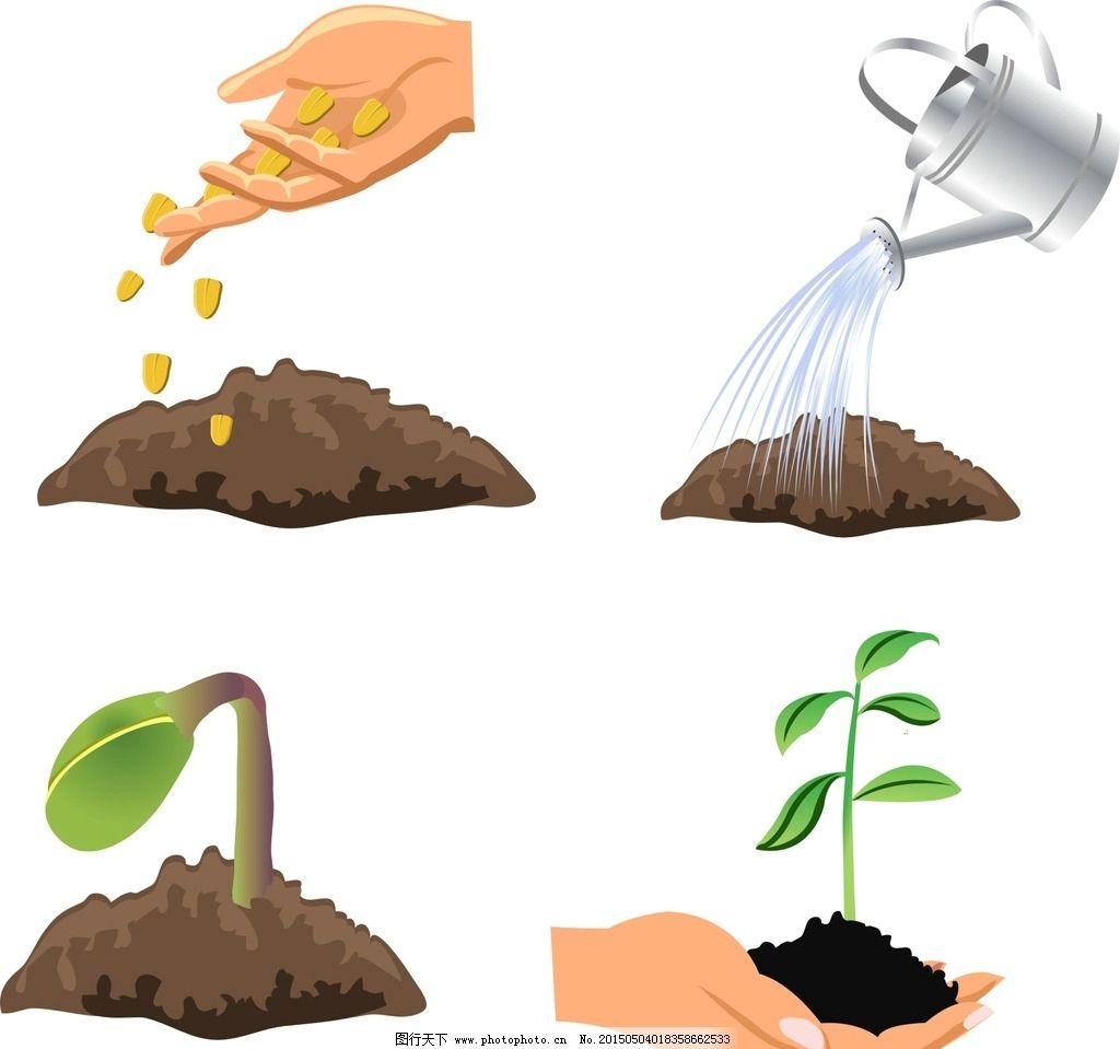 绿豆种子发芽过程图