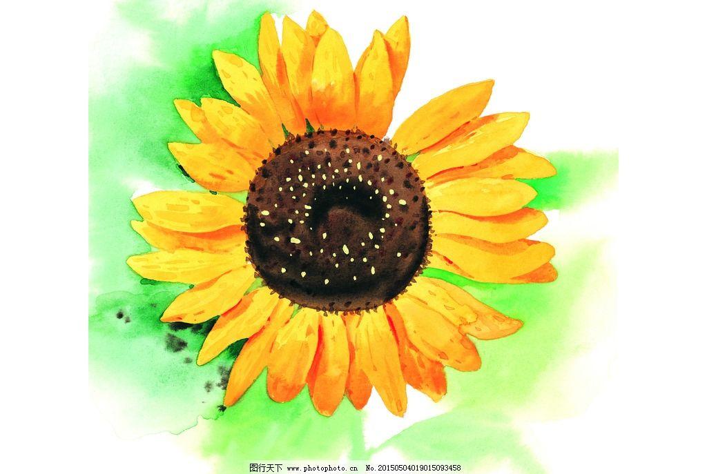 向日葵 手绘向日葵 水彩