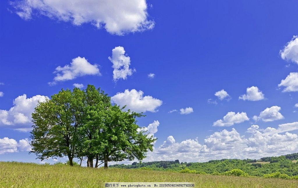树木 大树 野草 草地 绿树 天空 蓝天白云 云彩 云层 自然风光 风景图