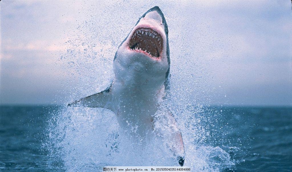 鱼类 海上动物